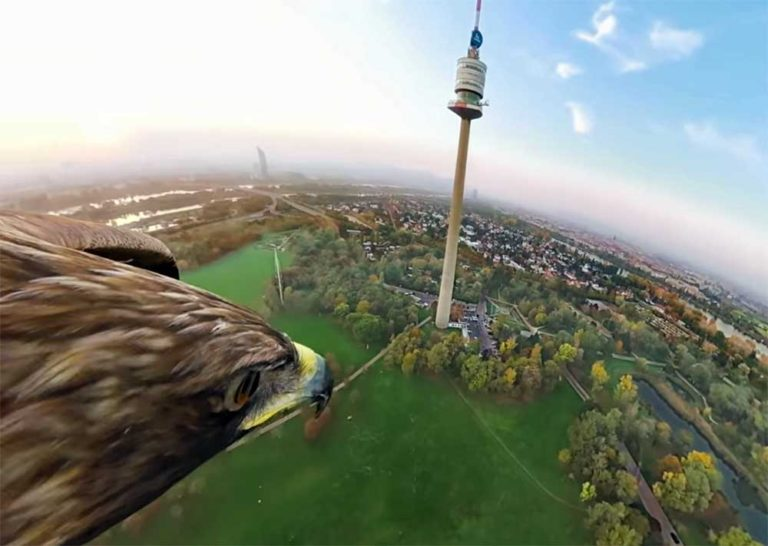 eagle's eye vienna